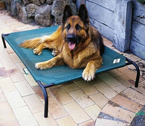 Dogs Creates With Mat Bed