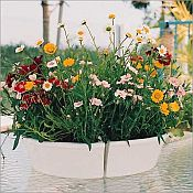 Ceramic Umbrella Planter Apcm940pw